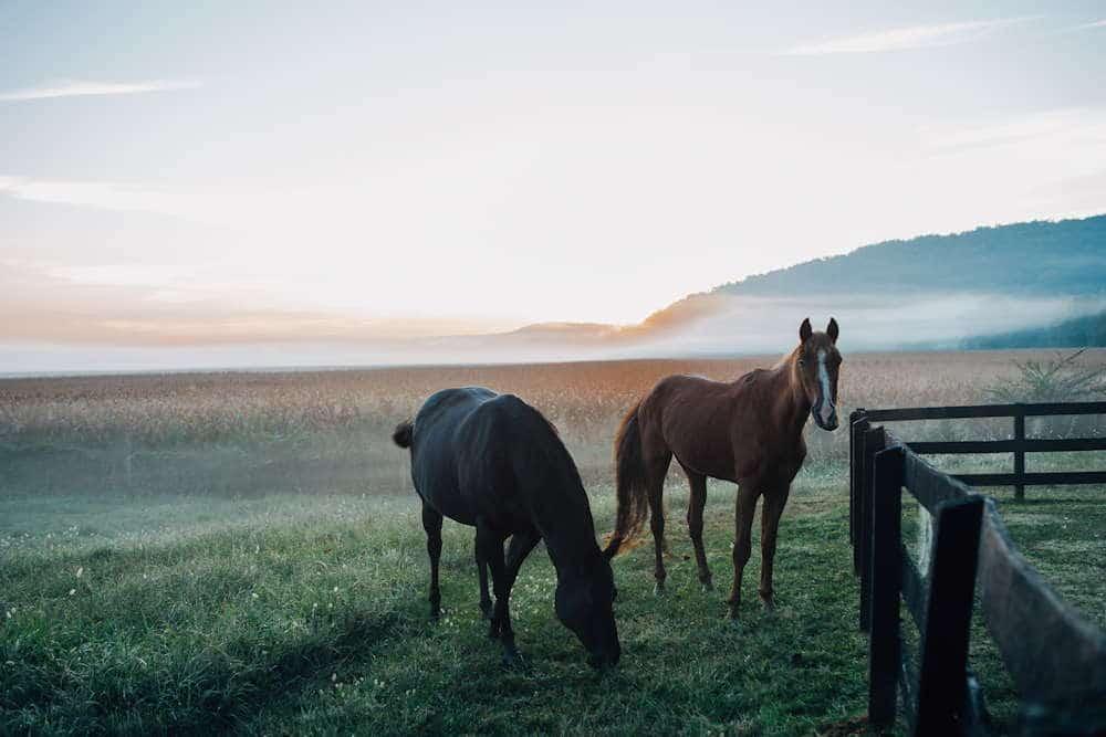 Afbeeldingen optimaliseren: paarden in de ochtendmist